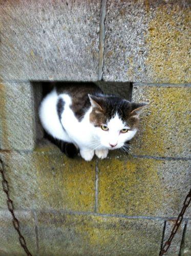 保田駅の近くの猫だまりで