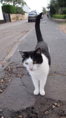 英国Hinxton村の白黒猫